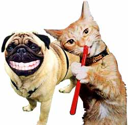 Toothbrush Dog & Cat Dental Cleaning